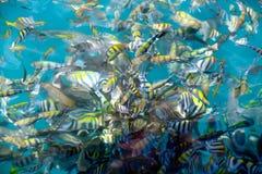 Beautiful fish in the sea stock image