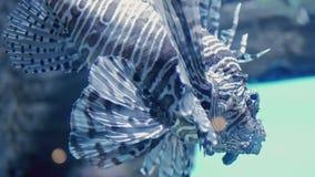 Beautiful fish swimming in tank at aquarium