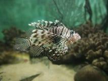 Fish. Beautiful fish in tank Royalty Free Stock Photography