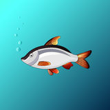 The Beautiful fish under the water in the game style. Beautiful fish under the water in the game style Stock Photography