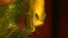 Beautiful fish in water stock video