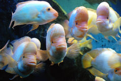 Beautiful fishes Stock Images