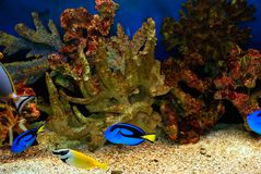 Beautiful fishes Royalty Free Stock Photos