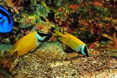 Beautiful fishes Royalty Free Stock Photo