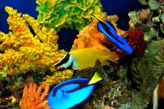 Beautiful fishes Royalty Free Stock Images