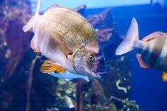Beautiful Fishes Stock Photos