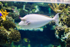 Beautiful Fishes Stock Photography