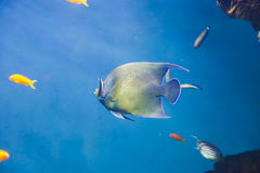 Beautiful Fishes Royalty Free Stock Photography