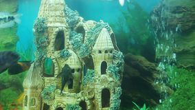 Beautiful fishes swimming in aquarium with underwater castle, hobby for relax. Stock footage stock footage