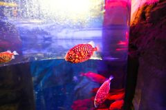 Beautiful Fishes - Underwater life. Colorful Fishes - Underwater life fish on blue water sea - Dubai stock photography