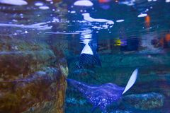 Beautiful Fishes - Underwater life. Colorful Fishes - Underwater life fish on blue water sea - Dubai stock image