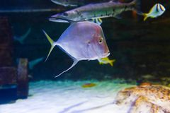 Beautiful Fishes - Underwater life. Colorful Fishes - Underwater life fish on blue water sea - Dubai stock images