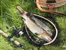 Beautiful fishing still life with trout Royalty Free Stock Photos