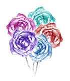 Beautiful five colorful roses bouquet charcoal artistic drawing. Pencil artistic drawing of five colorful roses bouquet vector illustration