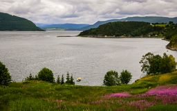 Beautiful fjord coast in Norway on a summer day. In the foreground flowers. And in the distance you can see the village stock photos