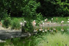 beautiful flamingo in a natural park Stock Photo