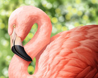 A beautiful flamingo Stock Photo