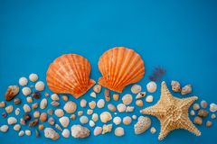 Flat Backgraound Shell BK. A beautiful flat background of a shell composition. Have a negative space. Beautiful colors in a harmonious composition royalty free stock photos