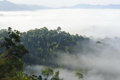 Beautiful floating fog landscape in rain forest. Stock Image