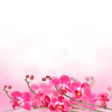 Beautiful floral abstract background,  isolated orchids. Royalty Free Stock Photos