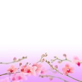 Beautiful floral abstract background Stock Photos