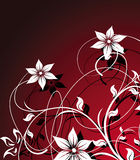 Beautiful floral abstraction Stock Image