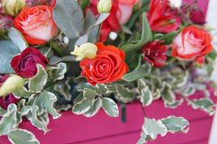 Beautiful floral arrangement of red, pink and burgundy flowers in a pink wooden box stock photography