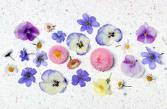 Beautiful floral arrangement Royalty Free Stock Images