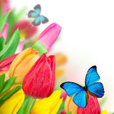 Beautiful floral background Stock Photo
