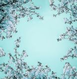Beautiful floral background with blue blossom on light turquoise, frame. Creative nature flowers layout royalty free stock images