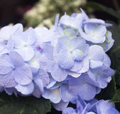Beautiful floral background in blue colors Royalty Free Stock Photography