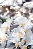 Beautiful floral background with delicate white artificial orchid powdered with snow and hoarfrost stock photos