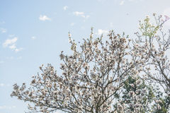 Beautiful floral background with flowering almond tree Stock Photos