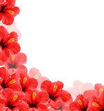 Beautiful floral background, frame Royalty Free Stock Photos