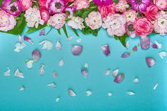 Beautiful floral background, texture, wallpaper. Flat-lay of pink flowers on blue background, top view, copy space royalty free stock photography