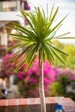Beautiful floral balcony in a small boutique hotel Stock Images