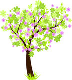 Beautiful floral blossom tree with green leaves. Beauty tree with green leaves and violet flowers Royalty Free Stock Image