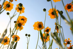 Beautiful Floral Borde Royalty Free Stock Images