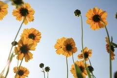 Beautiful Floral Borde Stock Photos