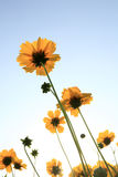 Beautiful Floral Borde Stock Photography