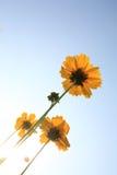 Beautiful Floral Borde Royalty Free Stock Image