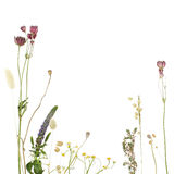 Beautiful floral border. Flowers on white background Stock Photography