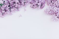 Beautiful floral border with lilacs. With copy-space. Beautiful floral border with lilacs. With copy-space Stock Images