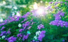 Beautiful floral bush Stock Photos