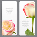 Beautiful Floral Cards with  Realistic Flowers Royalty Free Stock Photo