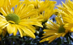 Beautiful Floral close up image Royalty Free Stock Photos