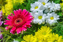 Beautiful floral composition with gerberas and daisies. A beautiful and colorful floral composition in sun light Royalty Free Stock Photos