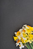 Beautiful floral corner with white and yellow daffodils flowers Royalty Free Stock Images