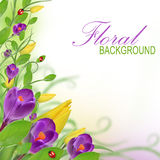 Beautiful floral design Royalty Free Stock Photography