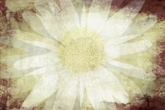 Beautiful floral design background Stock Photography